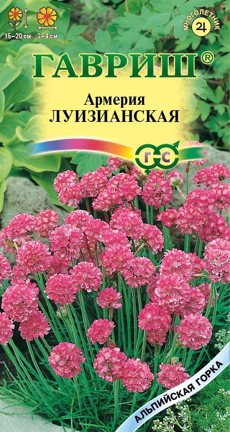 фото армерия цветы