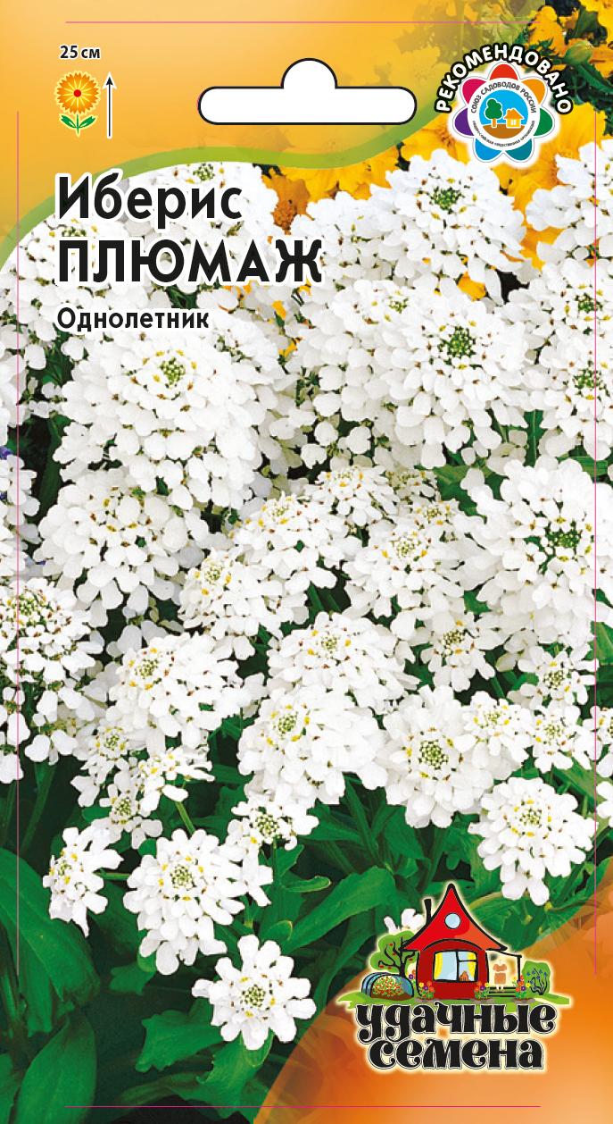 Иберис зонтичный выращивание из семян фото светлячок 32